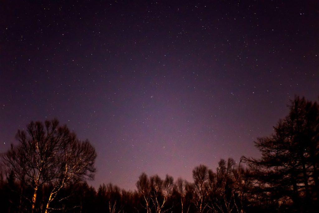 2020年11月25日、信州たてしな 白樺高原の蓼科第二牧場から北西方向、夜の星空風景。白樺林の上空に大きくりゅう座が写っている。
