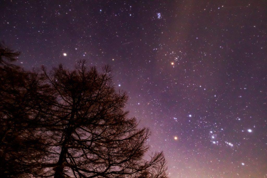 2021年1月19日、信州たてしな 白樺高原の蓼科第二牧場から、夜の星空風景。カラマツ林の先に見えるオリオン座など