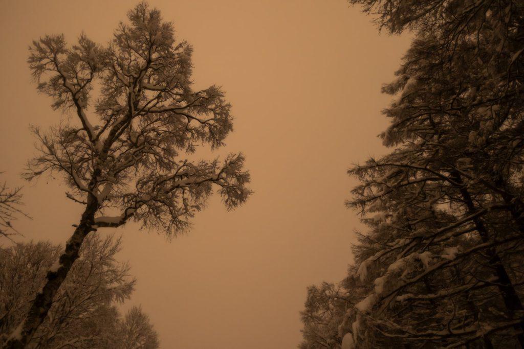2021年1月24日、信州たてしな 白樺高原の蓼科第二牧場から、夜の風景。雪景色となった蓼科第二牧場脇のカラマツ林。